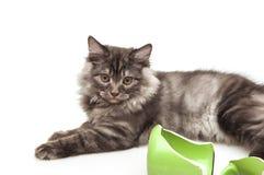 серый цвет кота милый Стоковая Фотография