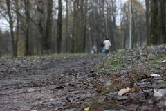 Серый цвет, темный путь atumn в парке силуэт листьев людей далеких упаденных под ногой после дождя стоковое изображение