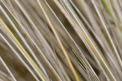 серый цвет травы стоковая фотография