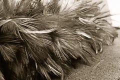 Серый цвет цвета пера цыпленка Стоковые Фото