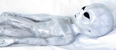 Серый цвет чужеземца на белой предпосылке Стоковые Изображения RF