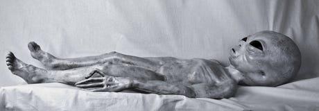 Серый цвет чужеземца на таблице Стоковые Фото