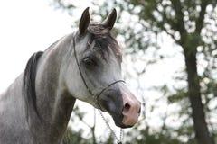 серый цвет filli Стоковая Фотография