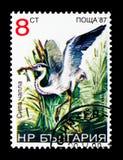 Серый Ardea cinerea, serie цапли птиц, около 1988 Стоковое Изображение
