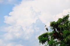 Серый egret в дереве Стоковые Фото