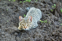 Серый striped котенок лежа на том основании Стоковое Изображение RF