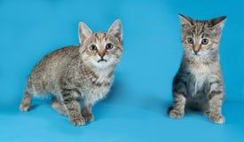 Серый striped котенок 2 на сини Стоковые Фотографии RF