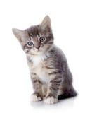 Серый striped котенок сидит на белой предпосылке. Стоковая Фотография RF