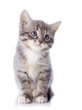 Серый striped котенок сидит Стоковая Фотография RF