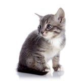 Серый striped котенок сидит Стоковые Фото