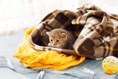 Серый striped newborn котенок в одеяле шотландки Стоковая Фотография RF