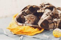 Серый striped newborn котенок в одеяле шотландки Стоковая Фотография