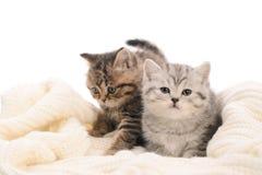 2 серых stripy котят на ткани связанной белизной Стоковое Фото