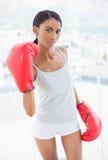 Серьезная конкурсная модель при перчатки бокса угрожая камеры стоковая фотография rf