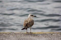 Серьезная птица Стоковое Фото