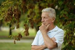 серьезное человека старшее Стоковые Фотографии RF