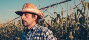 Серьезный внимательный фермер в кукурузном поле стоковые фото