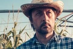 Серьезный внимательный фермер в кукурузном поле стоковое изображение rf