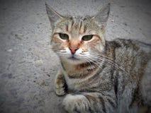 Серьезный кот Стоковое Фото