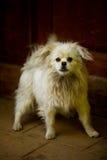 Сердитое положение собаки Стоковые Фото