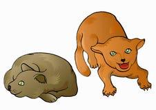 сердитое штилевое выражение кота Стоковые Изображения RF