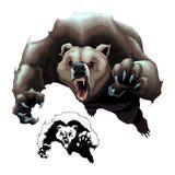 Сердитый бурый медведь Стоковые Фото