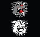 Сердитый бульдог Стоковые Изображения RF