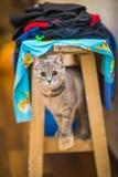 Сердитый кот Стоковое Фото
