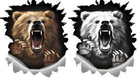 Сердитый медведь окрика на белой предпосылке Когти зверя срывая металл 2 изменения в цвете и monochrome черно-белом бесплатная иллюстрация