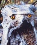 Сердитый смотря быть гнить тролля деревянный fairy Стоковые Изображения
