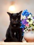 Сердитый черный кот сидит около вазы с цветками. Стоковое фото RF
