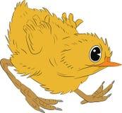 Сердитый chiken - иллюстрация Стоковые Фото