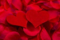 Сердца на лепестках розы стоковое изображение