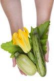 Сердцевины в isokated руках Стоковая Фотография RF
