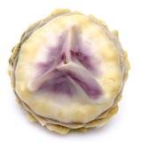 Сердце артишока Стоковая Фотография RF