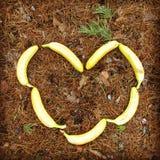 Сердце бананов стоковые изображения rf