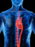 сердце выделило Стоковое Изображение RF