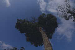 Сердце в голубом небе стоковое фото rf