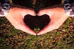 Сердце влюбленности рук стоковые фотографии rf