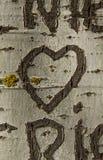 Сердце гравируя дерево Стоковое Фото