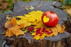 Сердце гранатового дерева для влюбленности и хорошего настроения Стоковые Изображения RF