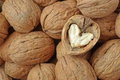 Сердце грецкого ореха Стоковые Фото