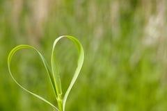 сердце естественное стоковое изображение rf