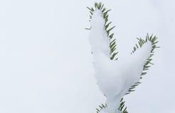 Сердце ели Стоковая Фотография RF