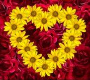 Сердце желтых цветков декоративных солнцецветов Helinthus и красной розы Стоковая Фотография