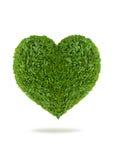 Сердце зеленых листьев Стоковое Фото
