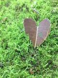 Сердце лист на мхе Стоковое Изображение RF