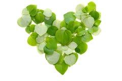 Сердце лист Стоковые Фотографии RF