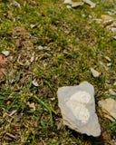 Сердце камня Стоковая Фотография RF