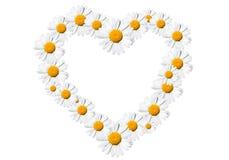 Сердце маргариток стоковые фото